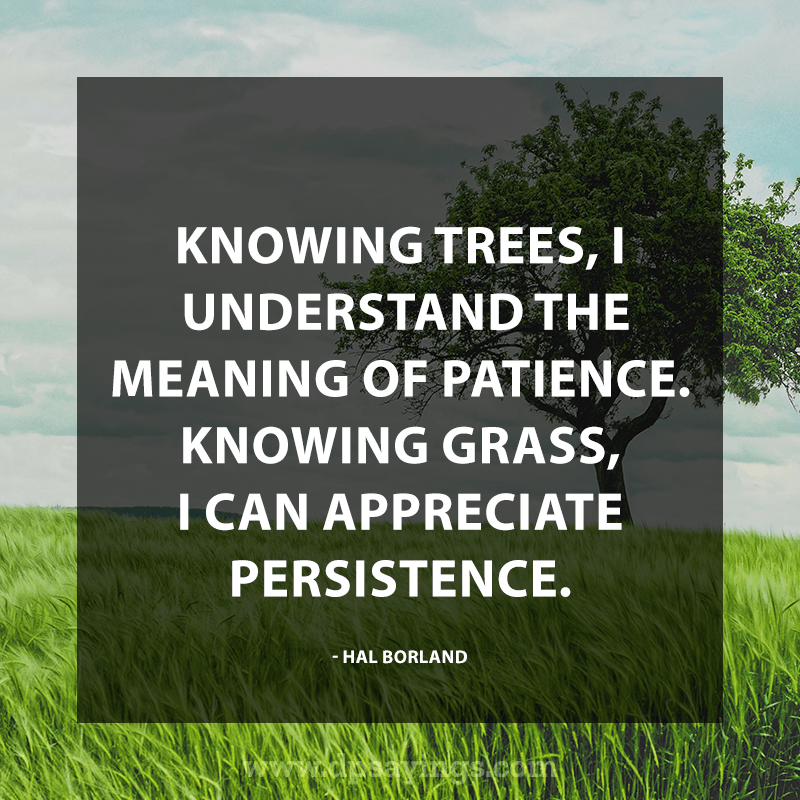 Best Patience Quotes And Sayings 64