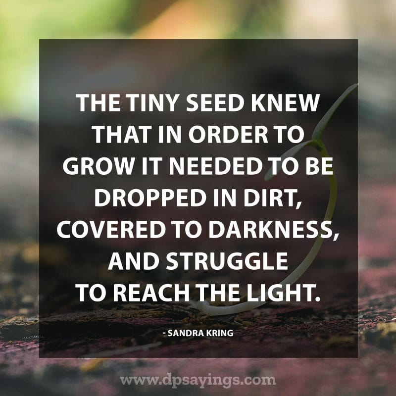 "Perseverance Quotes And Sayings 40 ""The tiny seed knew that in order to grow it needed to be dropped in dirt, covered to darkness, and struggle to reach the light."" – Sandra Kring"