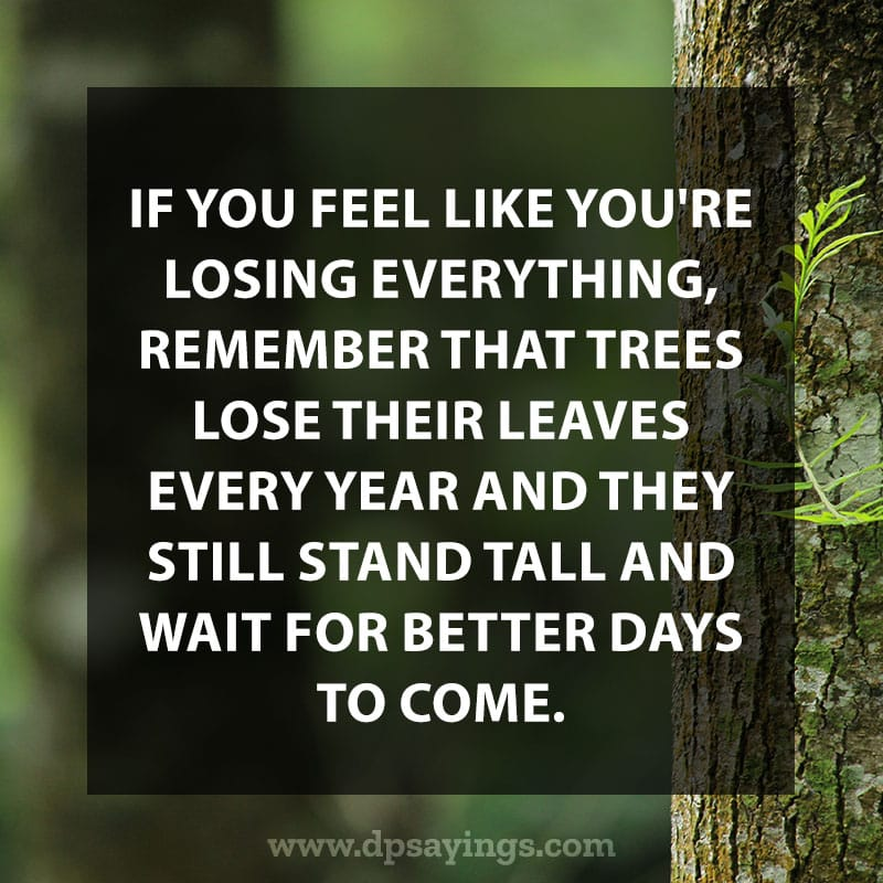 "Daily life quotes 36 ""If you feel like you're losing everything, remember that trees lose their leaves every year and they still stand tall and wait for better days to come."""