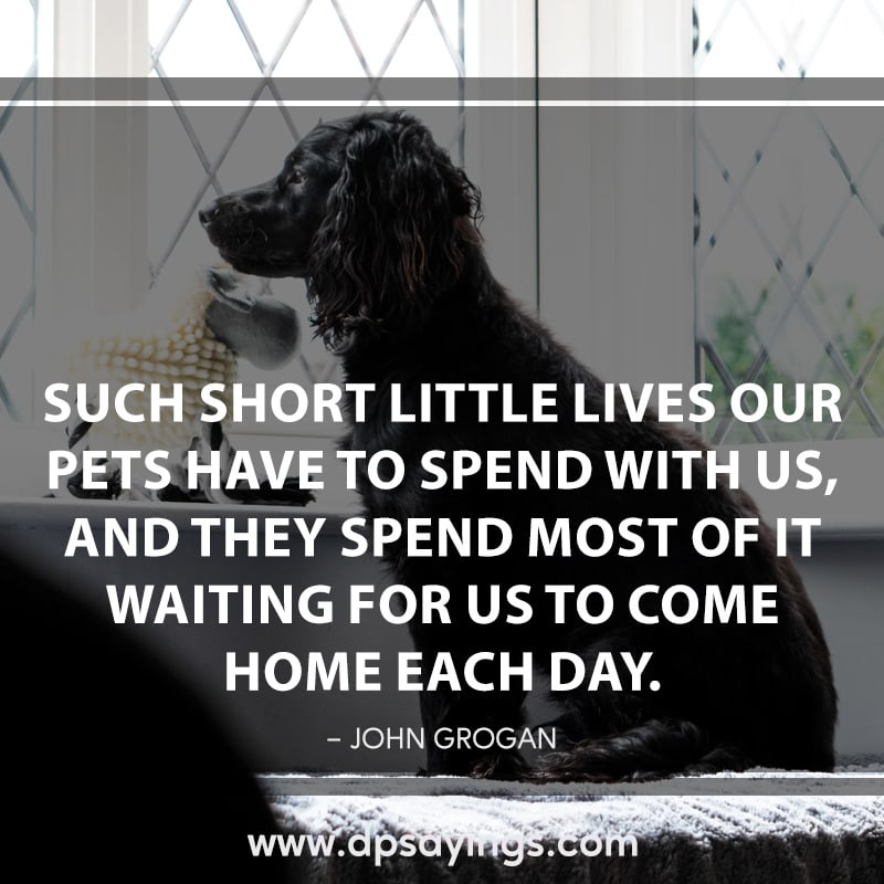 11 waiting dog quotes and sayings
