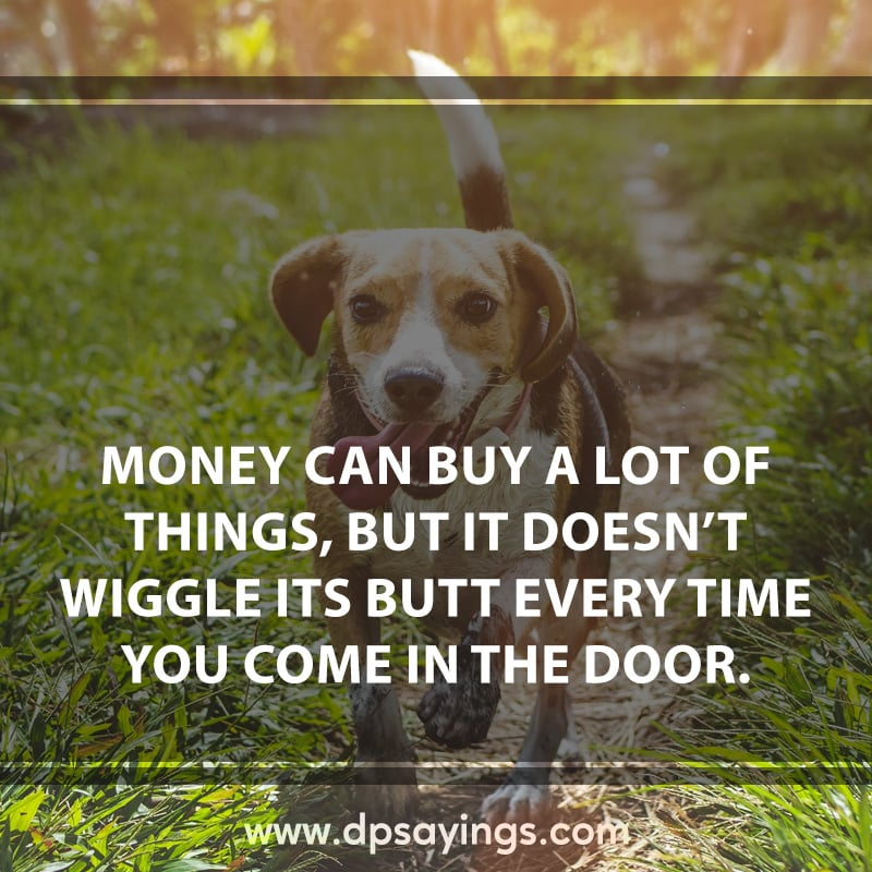 12 dog loyalty quotes