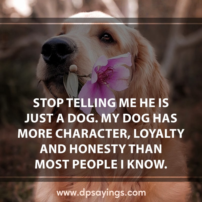 14 inspirational dog quotes and sayings