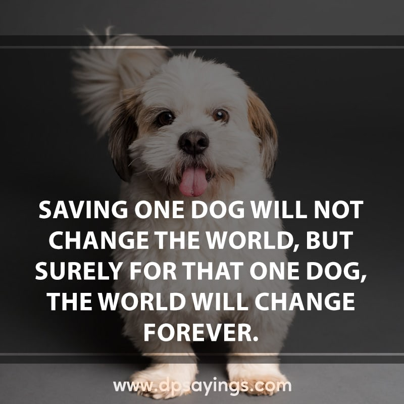 15 love for dog quotes and sayings