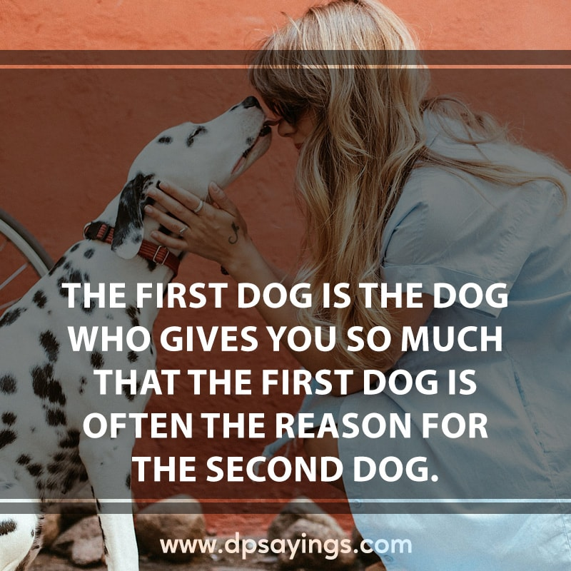 16 dog quotes and sayings