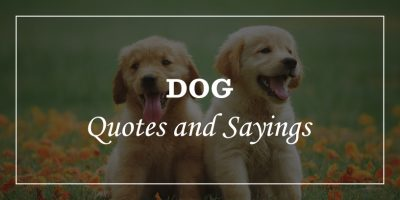 Featured Image for dog quotes and sayings