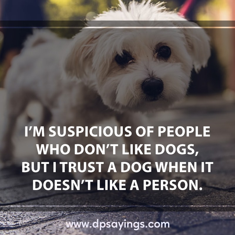 inspirational dog quotes and sayings