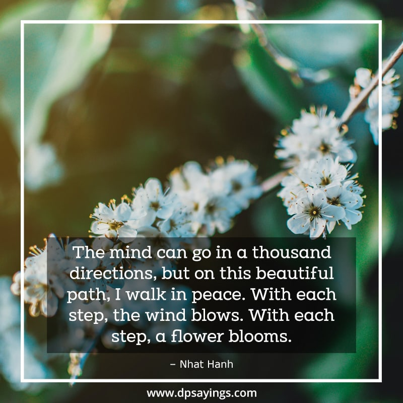 A quote on meditation which tells about walk in peace.